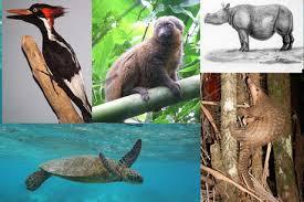 پاورپوینت کدهای اختصاصی پژوهش بر روی حیوانات